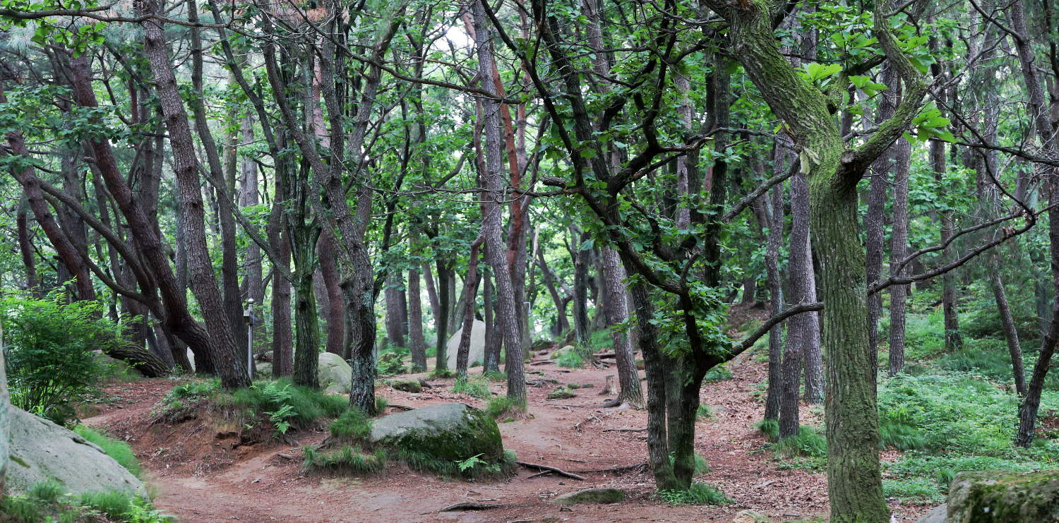 sk-busan_forest